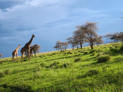 セレンゲティ国立公園