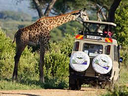 Des safaris aux parc nationaux
